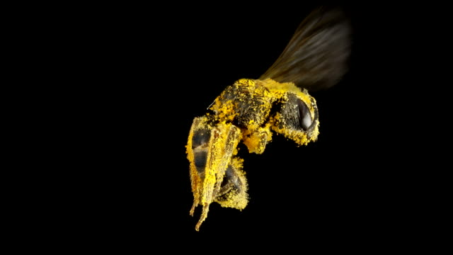 Sweat Bee 4K – Video