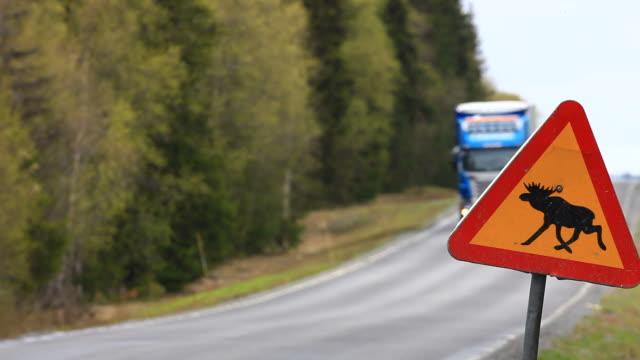 sweden - älg sverige bildbanksvideor och videomaterial från bakom kulisserna