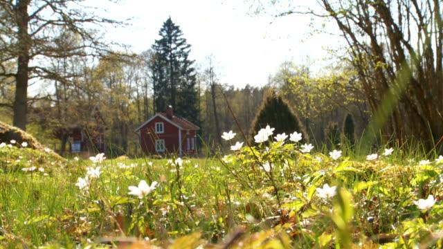 swedish landscape video