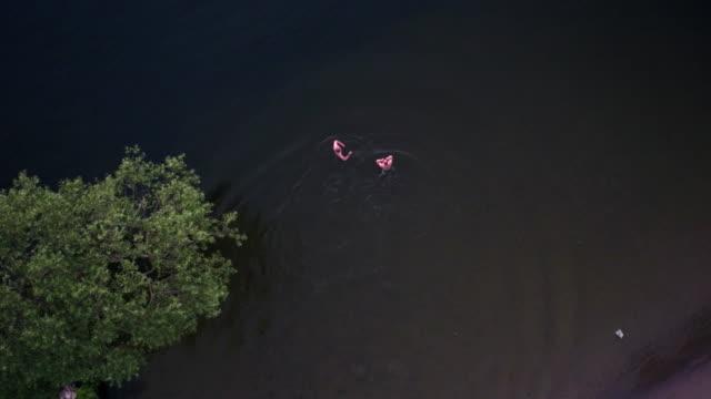 antenne: schwimmen in einem see - ein bad nehmen stock-videos und b-roll-filmmaterial