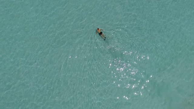 swimming in crystal clear sea - sezione superiore video stock e b–roll