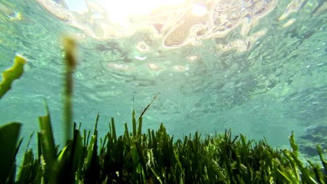 Swimming in posidonia underwater video