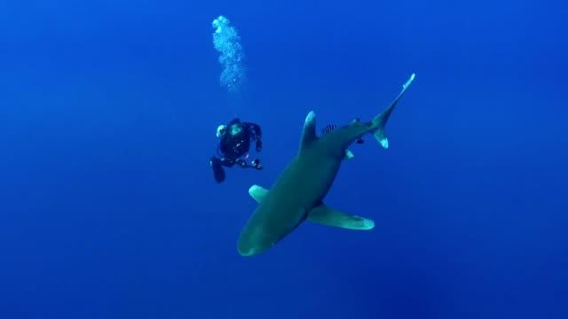 schwimmen mit großen weißen haien. unterwasserlandschaft - tauchen stock-videos und b-roll-filmmaterial