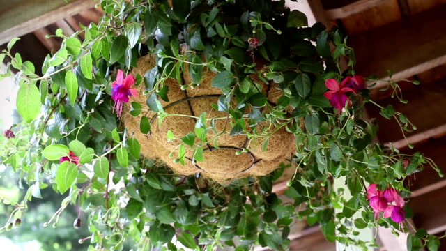 Swinging floral potted plant under covered porch during daytime Swinging floral potted plant under covered porch during daytime potted plant stock videos & royalty-free footage