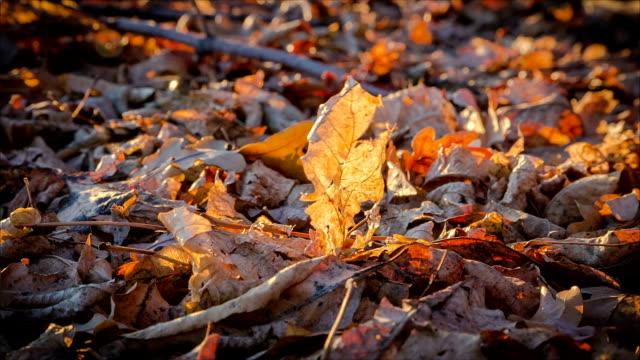 swinging yellow oak leaf on the ground video