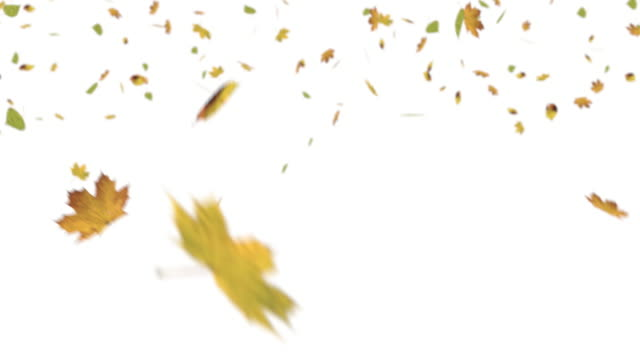 Swirling leaves on white screen Swirling green and yellow leaves falling down on white screen. fall leaves stock videos & royalty-free footage