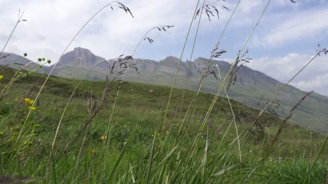 Swiss Mountain meadow in the Lepontine Alps close to the Town of Vals video