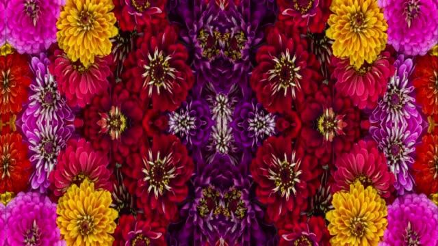 symmetrisk loop ready blom mönster - blommönster bildbanksvideor och videomaterial från bakom kulisserna