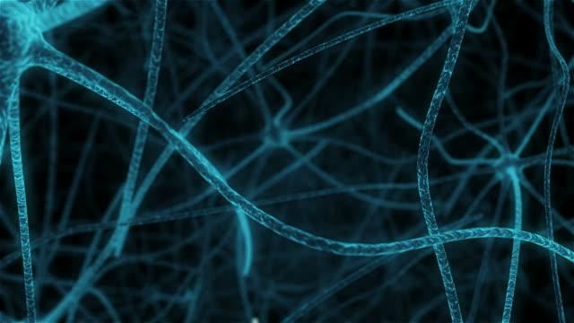 vídeos de stock e filmes b-roll de synapses in neuronal tissue human - sistema nervoso humano