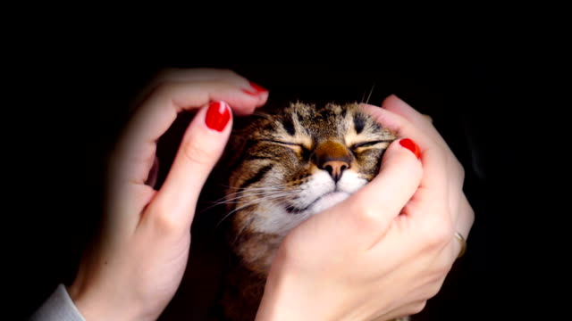 Tabby Cat Getting Pet video