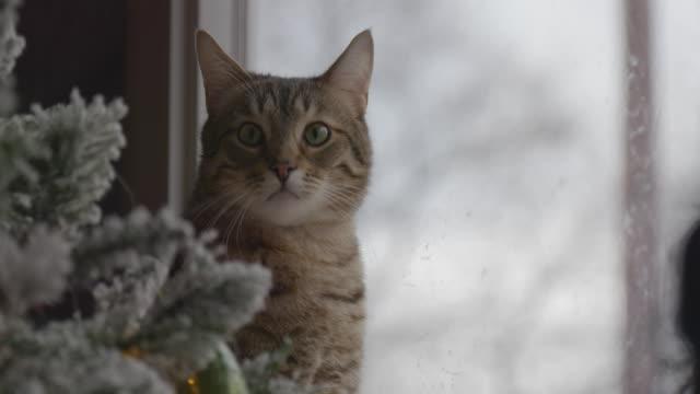 tabby katt inte förstöra holiday julgran - morrhår bildbanksvideor och videomaterial från bakom kulisserna