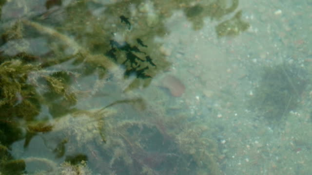 Tadpole Flock Swim Pond - video