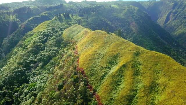tahiti's hill 03 video