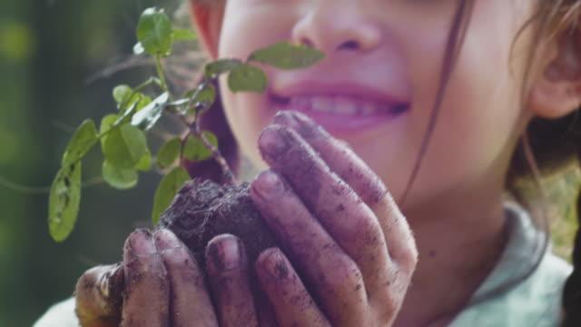 若い植物の木の世話をする - environmentalism点の映像素材/bロール