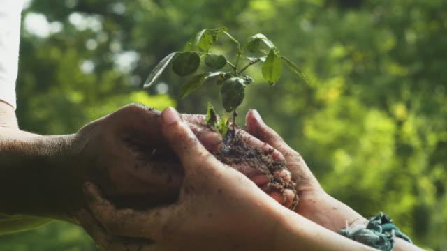 kümmern sie sich um jungen pflanzenbaum - baum stock-videos und b-roll-filmmaterial
