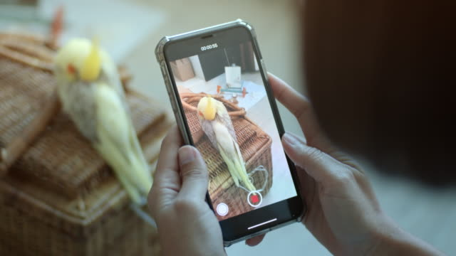 Take Photo Small green parrot bird is sleeping with smartphone