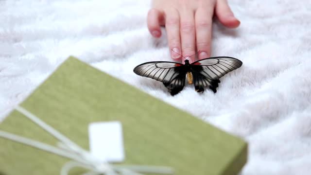 蝶を手に取る - チャームポイント点の映像素材/bロール
