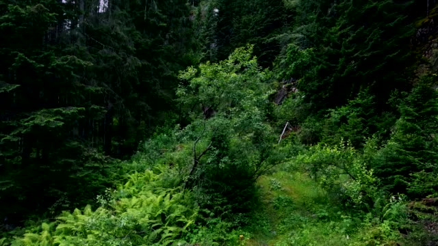 Take-off of the Copter from a forest glade. video