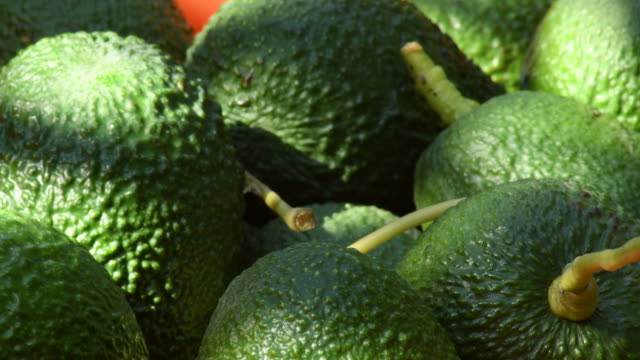 Taking a natural hass avocados recently harvested in a box