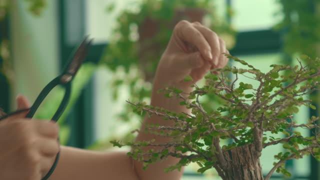 Taking care her bonsai in the garden.