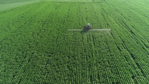 prendersi cura del raccolto. veduta aerea di un trattore che fertilizza un campo agricolo coltivato. - agricoltura video stock e b–roll