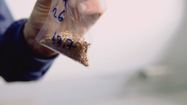 entnahme von goldproben zur analyse - gold waschen stock-videos und b-roll-filmmaterial