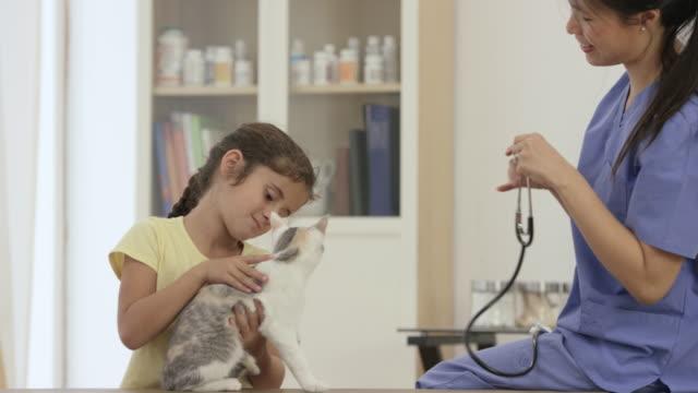 vídeos y material grabado en eventos de stock de tomando mi gato del animal doméstico al veterinario - veterinario