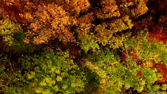 Taking off from top of autumn forest. video