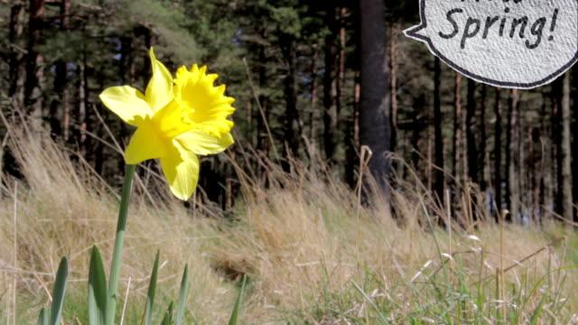 Talking Flower Hello Spring