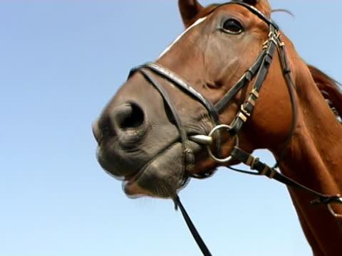 sprechen pferd (interlaced version - pferdeartige stock-videos und b-roll-filmmaterial