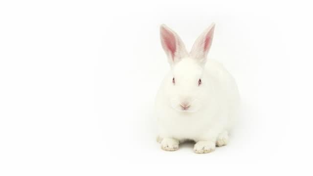 talking rabbit - tavşan hayvan stok videoları ve detay görüntü çekimi