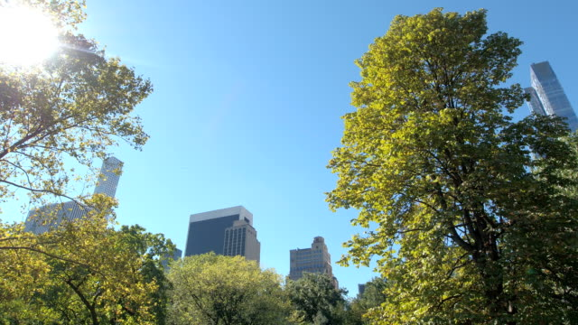 vídeos de stock e filmes b-roll de low angle: tall glassy skyscrapers in midtown manhattan overlooking central park - green city