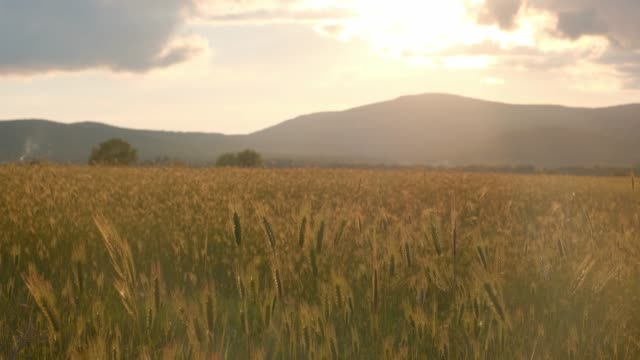 hohes gras im feld bei frühlingssonnenuntergang - grasland stock-videos und b-roll-filmmaterial