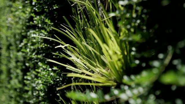 vídeos de stock e filmes b-roll de tall grass vertical growing seamless pattern - ivy building