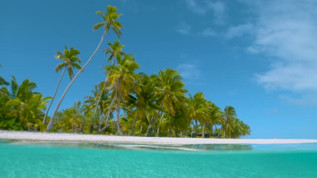 slow motion: hohe palmen bedecken unberührte weiße sandstrände auf one foot island - verbogen stock-videos und b-roll-filmmaterial