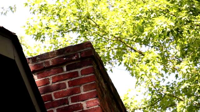 lång röd skorstenen mot en tall träd under våren på ett hus - roof farm bildbanksvideor och videomaterial från bakom kulisserna
