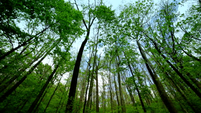 Tall stems of woods nature background video