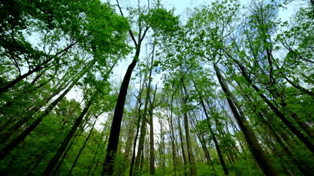 stockvideo's en b-roll-footage met tall stems of woods nature background - lang fysieke beschrijving