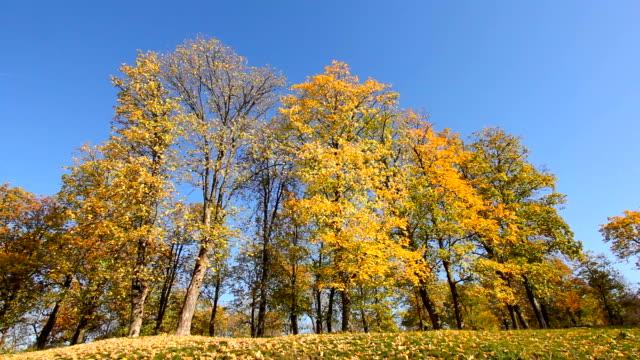 高い木スインギングに秋の風 - 気象学点の映像素材/bロール