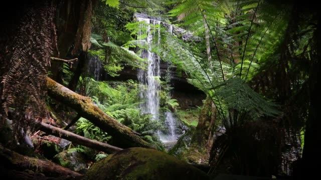 tasmanian waterfall - tap water filmów i materiałów b-roll