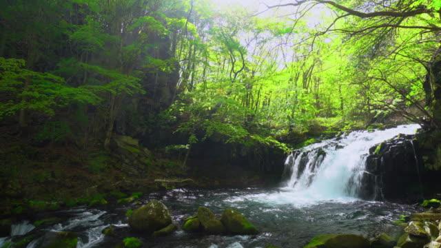 tateshina waterfall - естественное условие стоковые видео и кадры b-roll