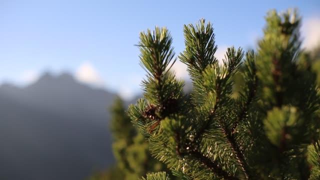 tatra dağları güz - zakopane stok videoları ve detay görüntü çekimi