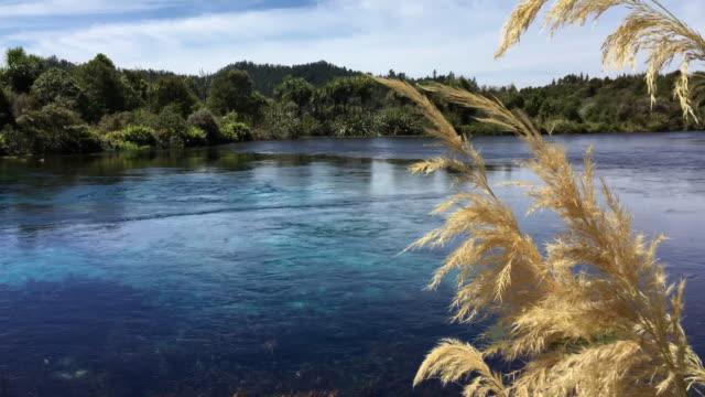 Te Waikoropupu Springs, Takaka, Golden Bay, New Zealand video