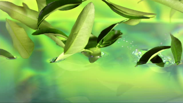 Tea Leaves Falling In Water (Super Slow Motion) video