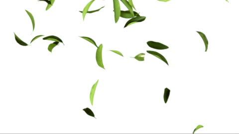 vídeos de stock e filmes b-roll de folhas de chá no fundo branco (super câmara lenta) - folha