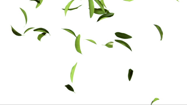 Tea Leaves On White Background (Super Slow Motion) video