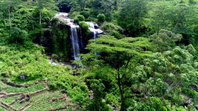 vídeos de stock e filmes b-roll de tea plantations from the central province of sri lanka - sri lanka