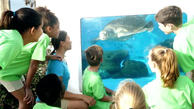 vidéos et rushes de enseignants et enfants regarder les tortues de mer à l'aquarium - zoo