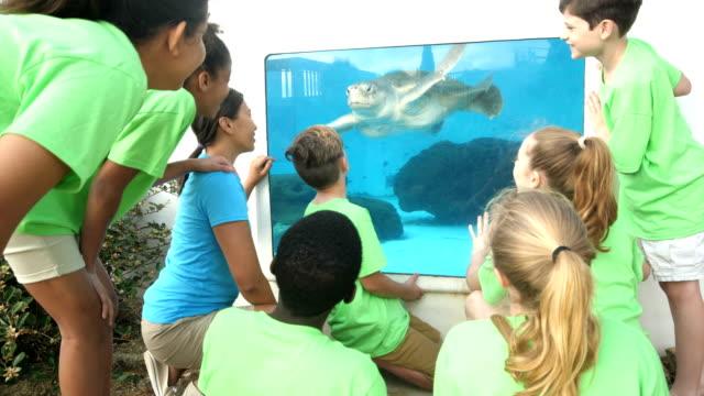 lehrer und kinder beobachten meeresschildkröte im aquarium - ferienlager stock-videos und b-roll-filmmaterial