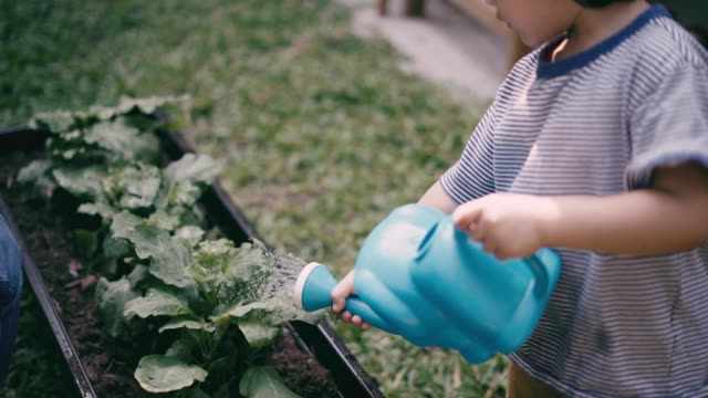 teaching boy to grow vegetables and water the plants - gardening video stock e b–roll